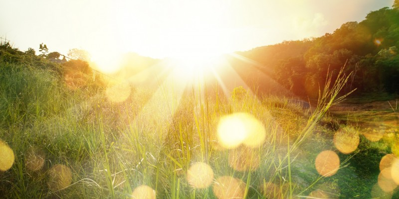Meadow landscape refreshment with sunray and golden bokeh. Beautiful sunrise in the mountain.